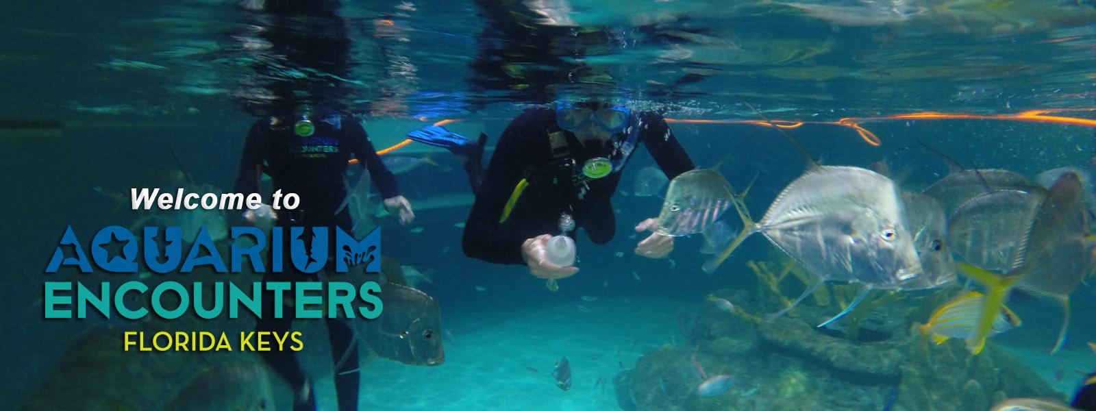florida keys aquarium encounters immerse yourself in the