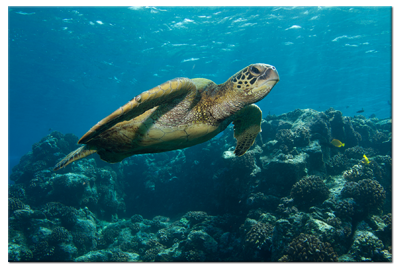 Florida Keys Aquarium Encounters Conservation Florida