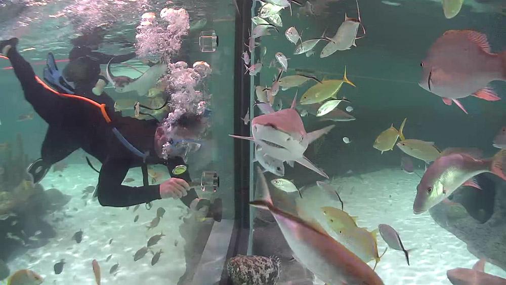 Florida Keys Aquarium Encounters Stingray Encounter