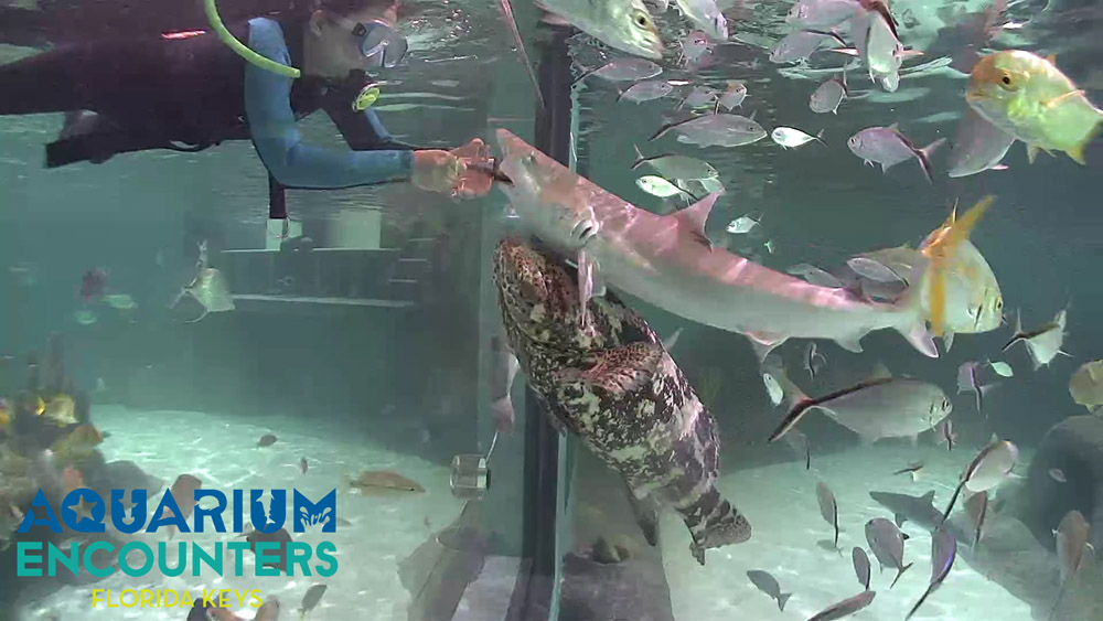 Florida Keys Aquarium Encounters Immerse Yourself In The