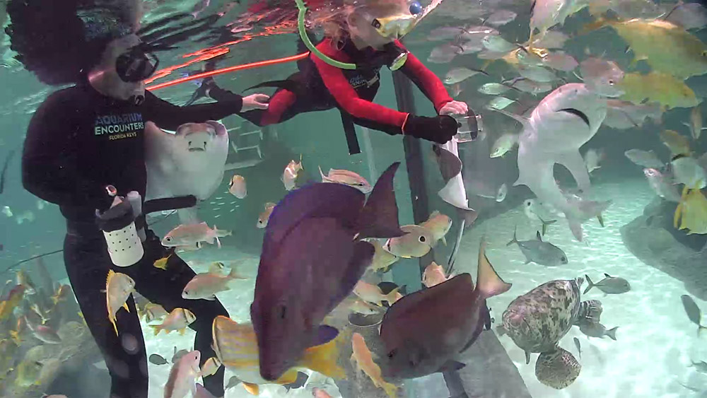 Florida keys aquarium encounters immerse yourself in the for Florida tropical fish
