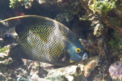 Florida keys aquarium encounters visit us florida keys for Florida tropical fish