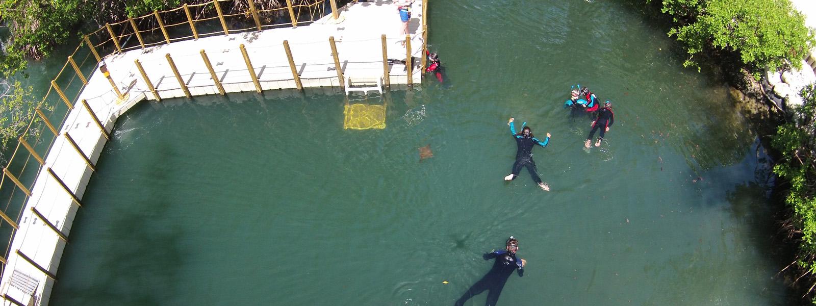 Florida Keys Aquarium Encounters Lagoon Encounter