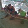 Nurse Shark Encounter Participants