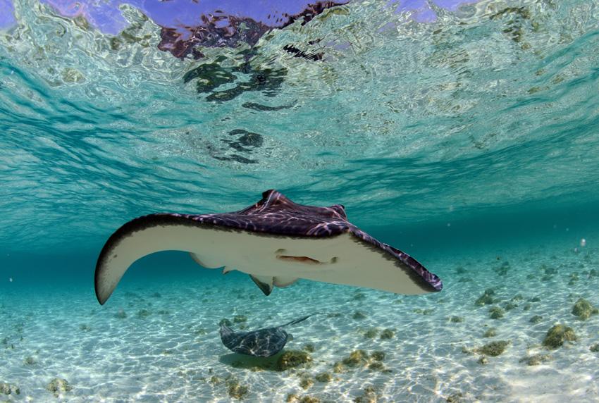 Florida Keys Aquarium Encounters Stingray Encounter - Florida Keys ...