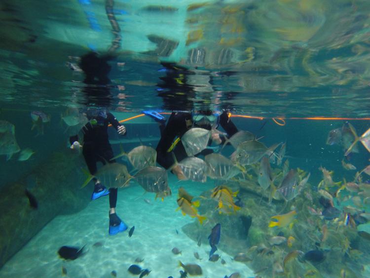 Florida Keys Aquarium Encounters Coral Reef Encounter