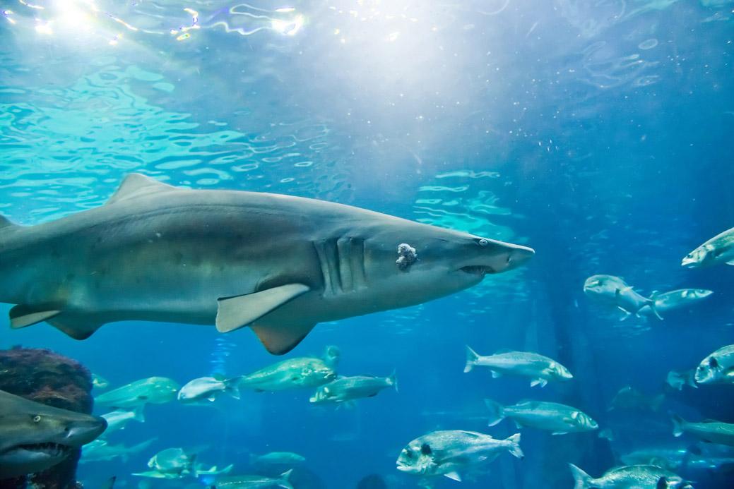 Florida Keys Aquarium Encounters Chevy Florida Insider