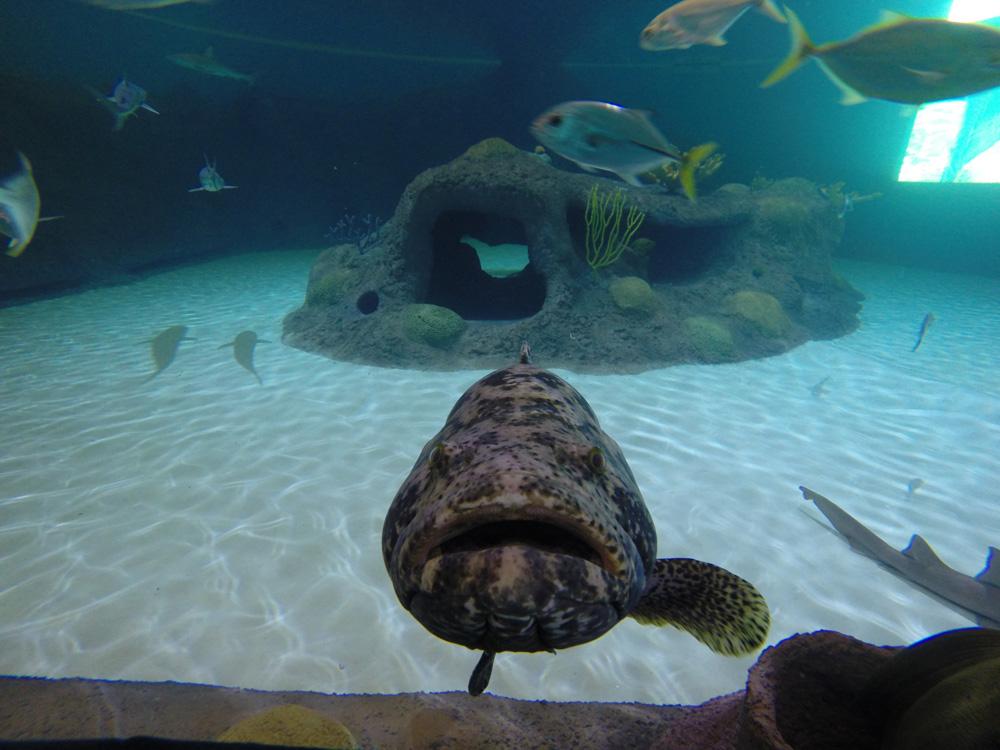 Florida Keys Aquarium Encounters Baby Stingray Encounter