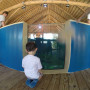 A young visitor explores the coral reef tank