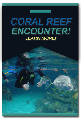 Florida Keys Aquarium Encounters Aquarium Encounters