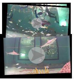 Explore our Florida Keys Aquarium Encounters Webcams