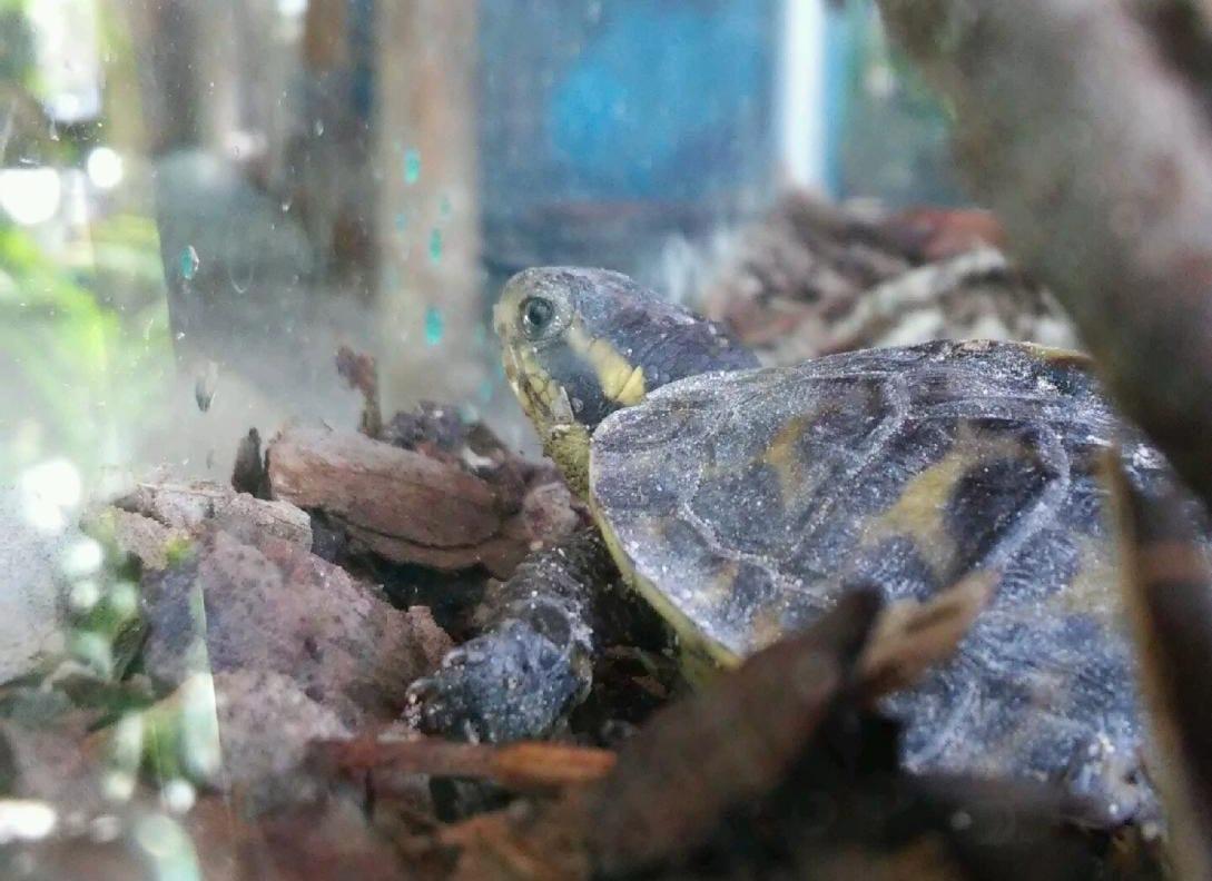 Florida Keys Aquarium Encounters Our New Arrivals