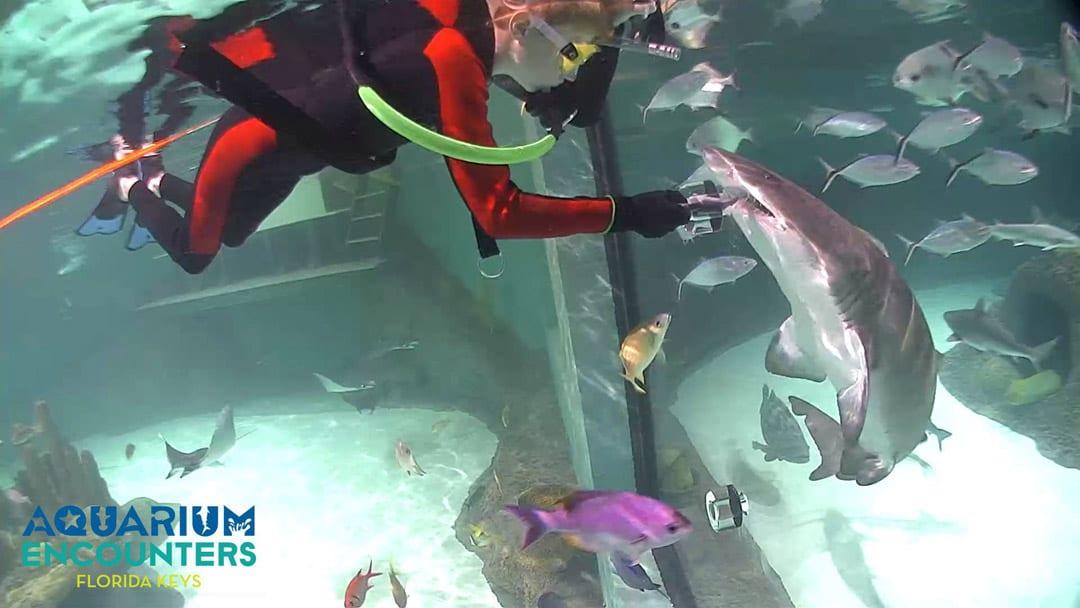 Florida Keys Aquarium Encounters One More Reason To