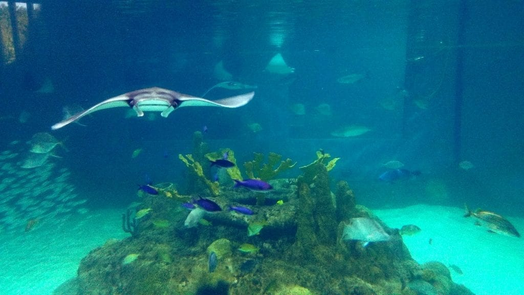 Florida Keys Aquarium Encounters BOGO specials for September