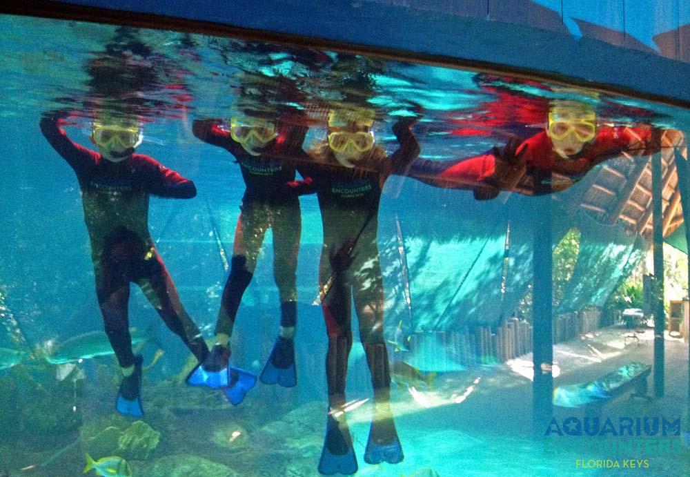 Florida Keys Aquarium Encounters Fall Membership Drive