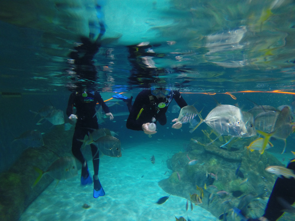 Things To Do In Marathon Florida Keys Aquarium Snorkeling