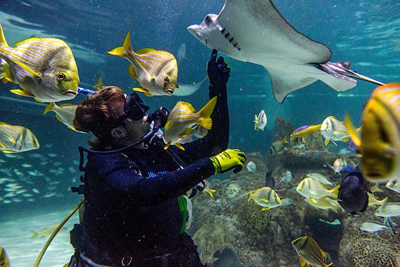 Encounters Florida Keys Aquarium Encounters