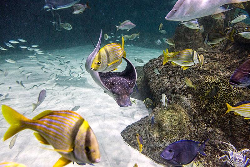 Exhibits Experiences Florida Keys Aquarium Encounters
