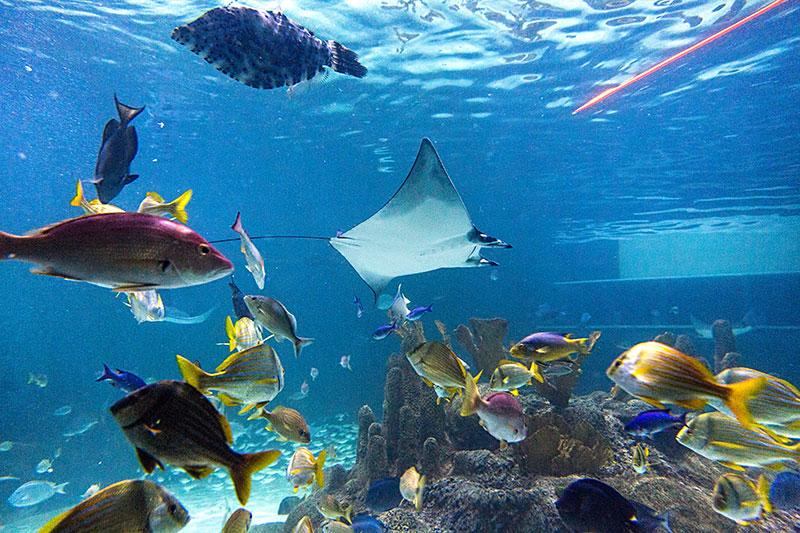 Coral Reef Snorkel Florida Keys Aquarium Encounters