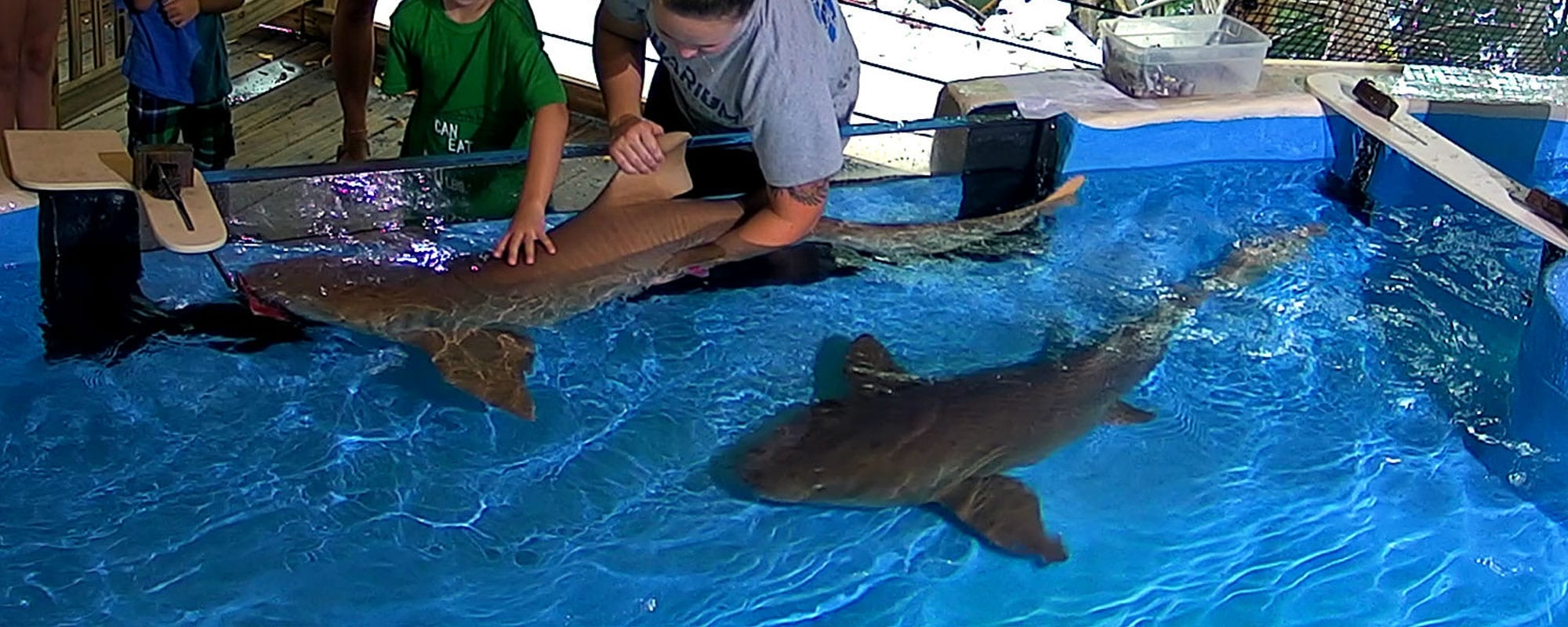 Stingray Cove Shark Bay And Nursery Pre Purchase Picture Packages