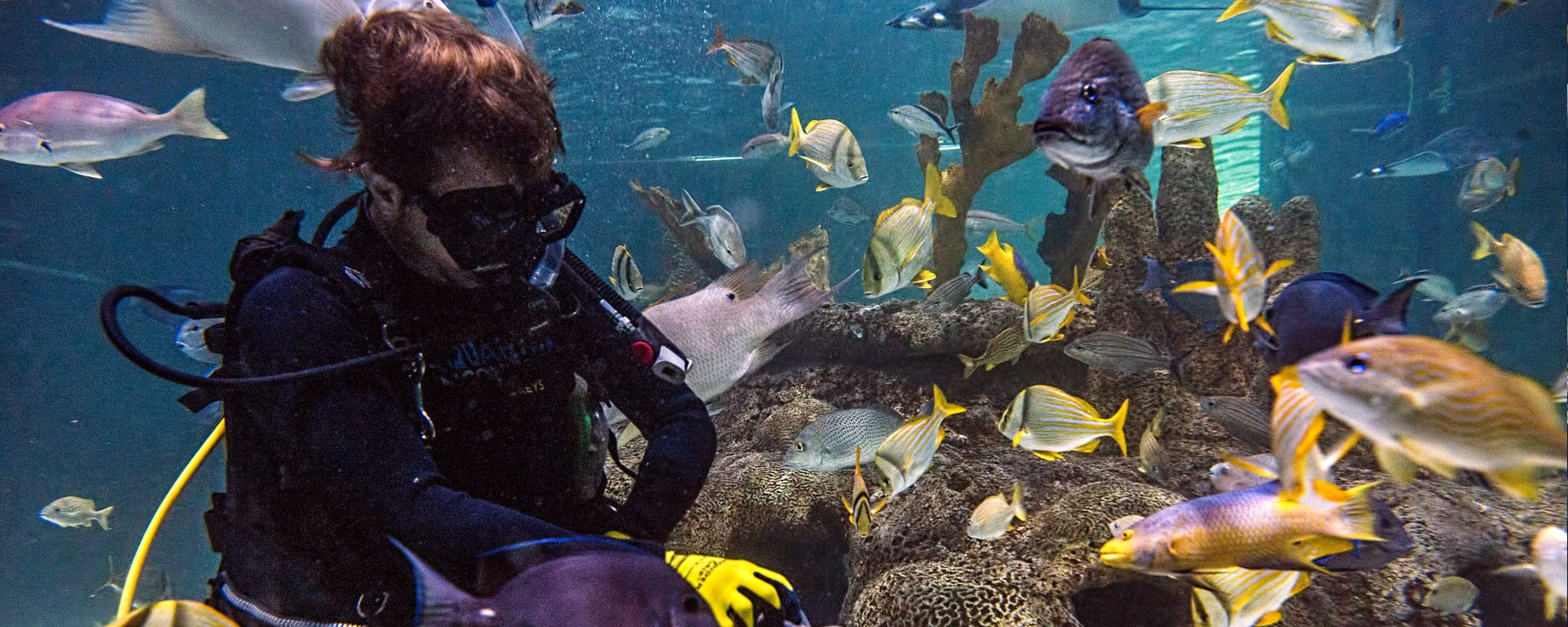 Coral Reef Regulator Florida Keys Aquarium Encounters