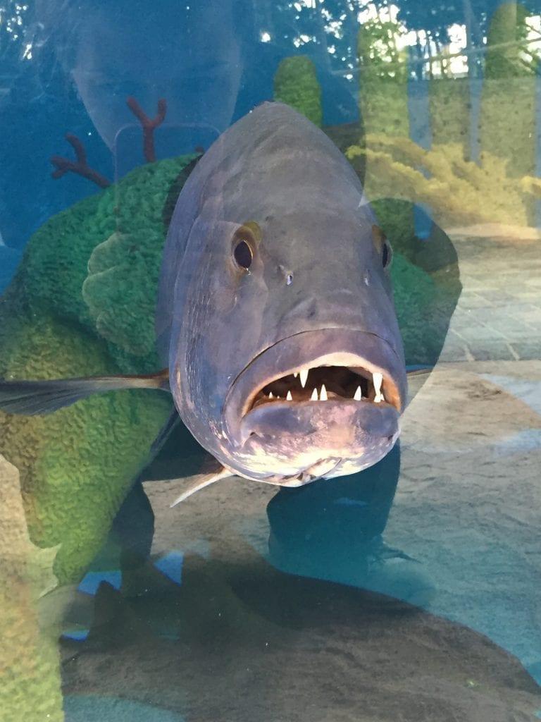 Meet The Animals Florida Keys Aquarium Encounters