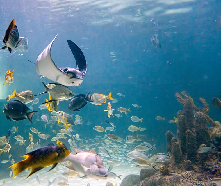 Marathon Aquarium Snorkeling Experience In A Coral Reef Tank