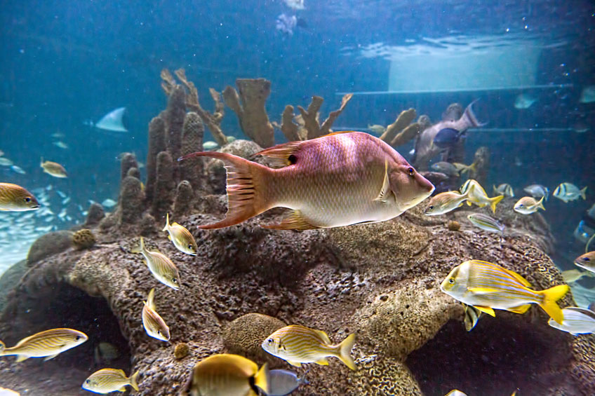 Coral Reef Tank Florida Keys Aquarium Encounters