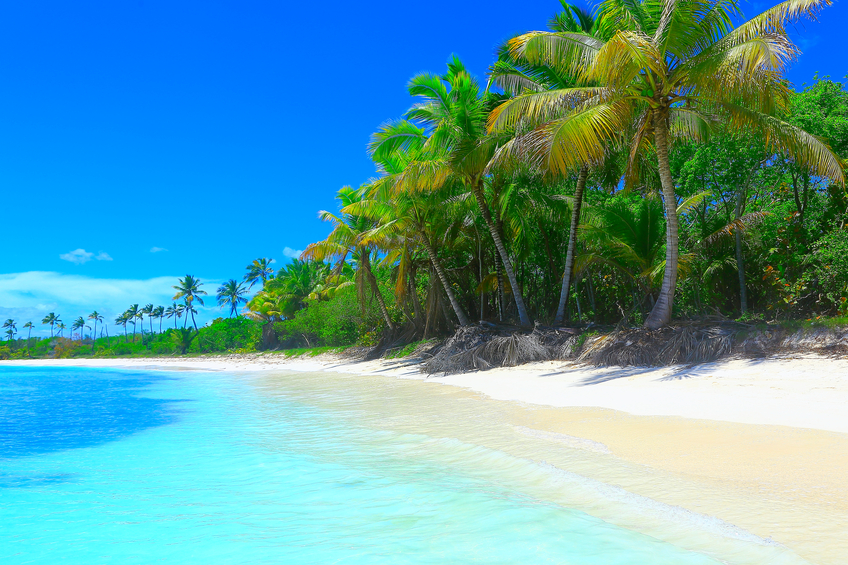 Tropical Paradise Relax Summer