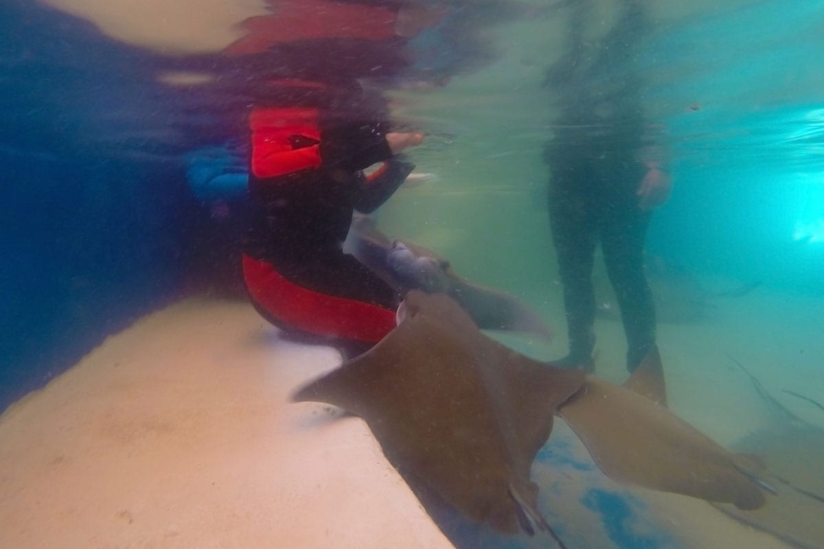 Stingray Encounters Florida Keys Aquarium Encounters