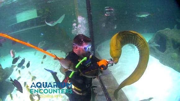 Experience Aquarium Encounters      - Florida Keys Aquarium