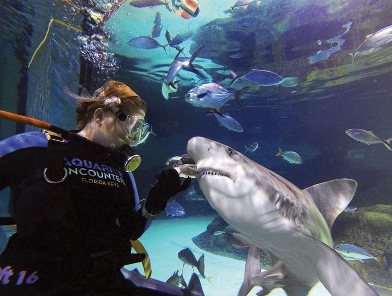Uncategorized Archives Florida Keys Aquarium Encounters