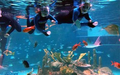 coral-reef-snorkel-webcam-image