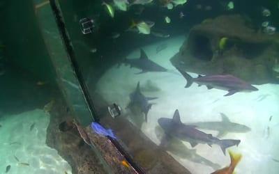 predator-reef-tank-webcam-image