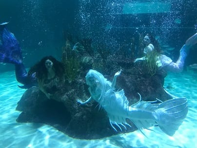 Mermaids at Aquarium Encounters