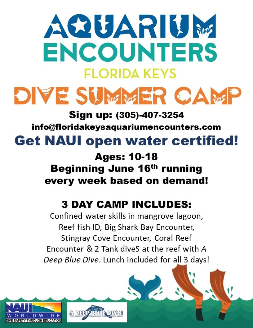 dive camp flyer 2020