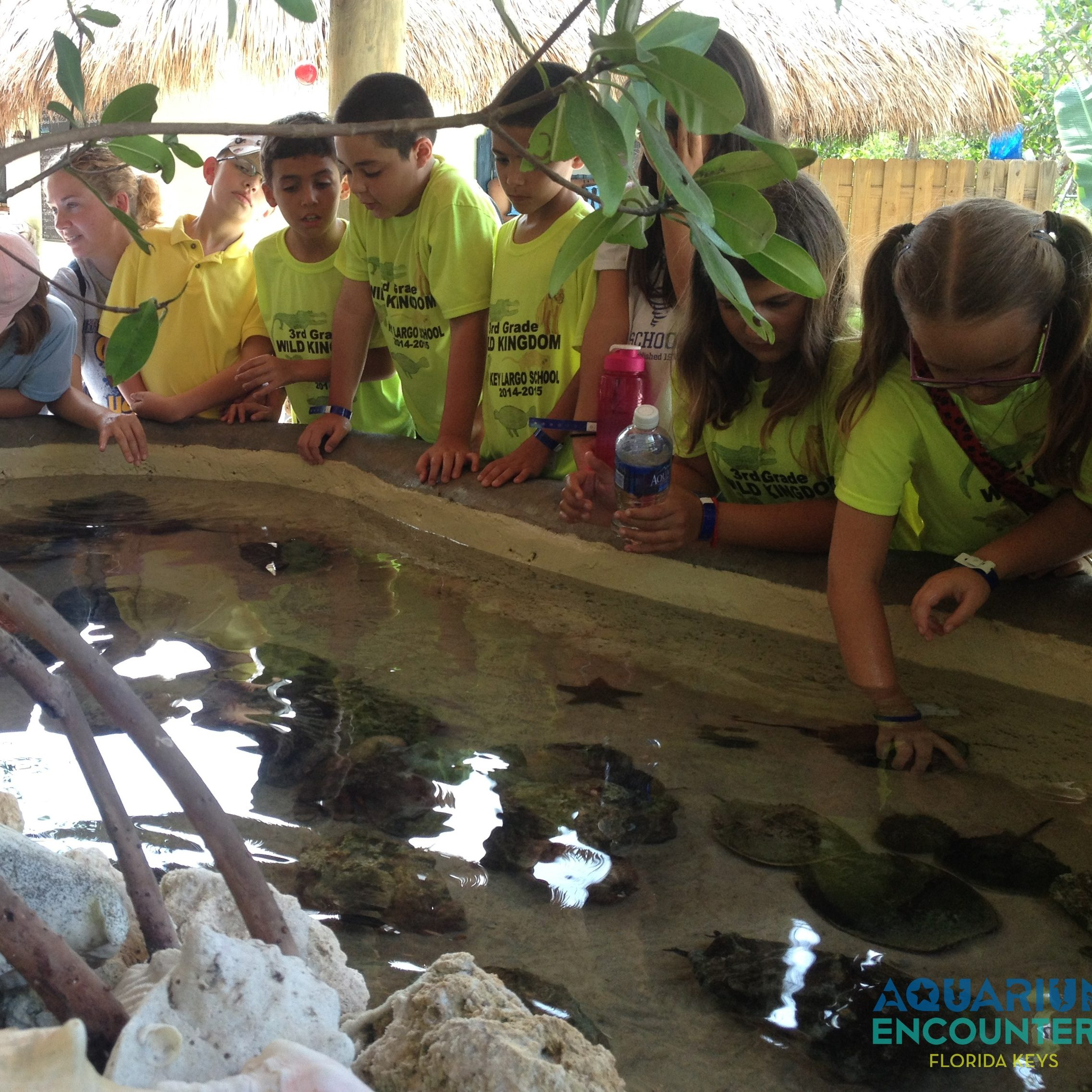 Picture of children at touch tank on school field trip
